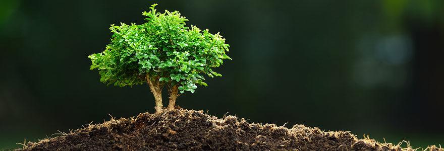 Exemple de cadeau écologique